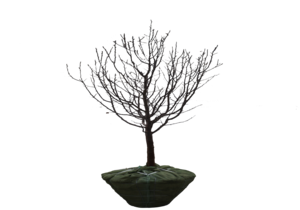 Tree_Cut_Out_1_300x210