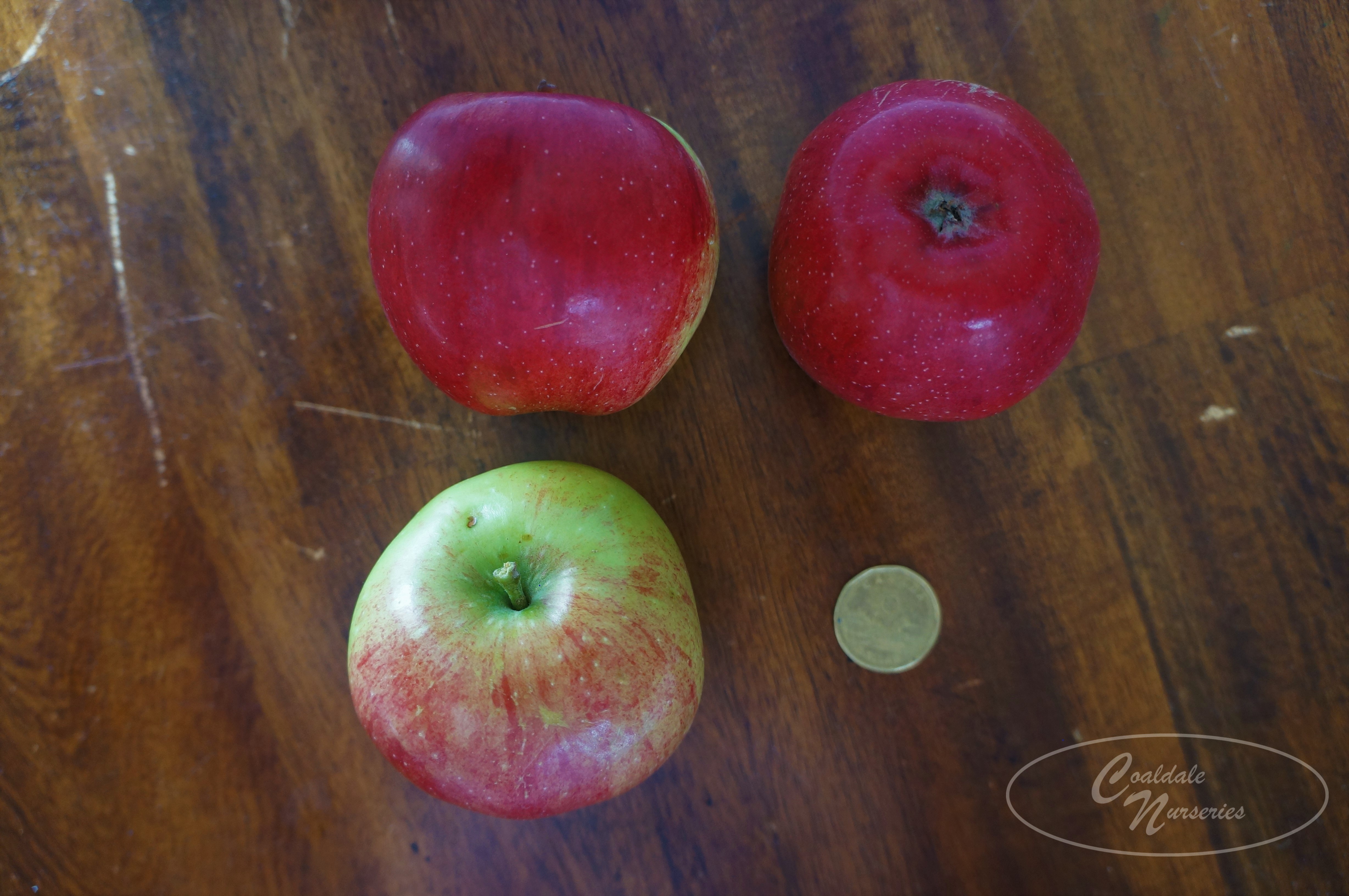 Haralson Apple Image