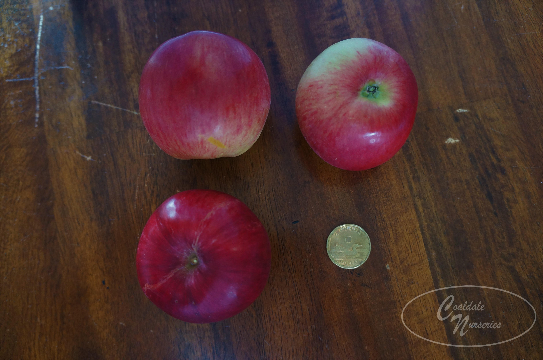 Hardi-Mac Apple Image